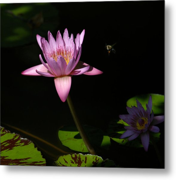 Lily And The Bee Metal Print
