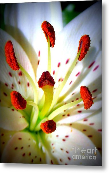Lily Center Metal Print