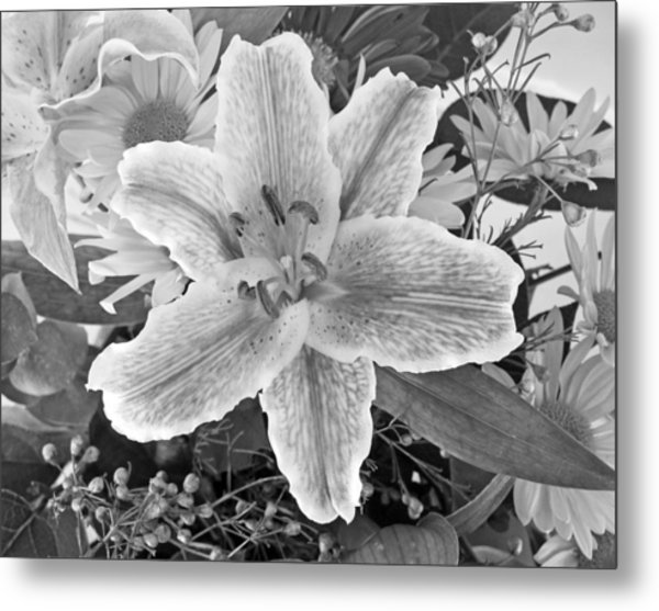 Lily Metal Print by Frank Winters