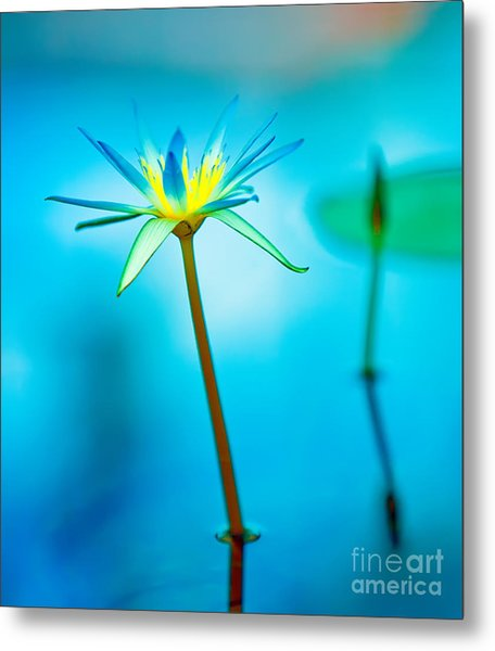 Lily In Blue Metal Print