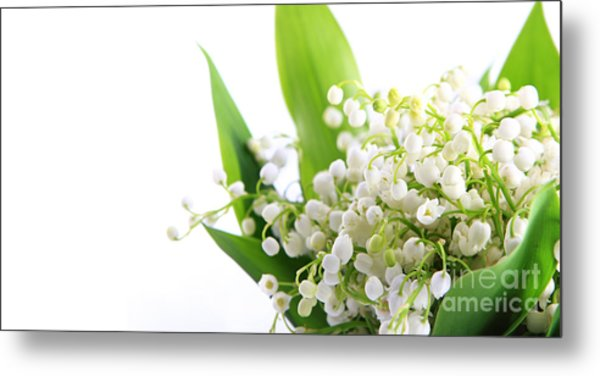 Lily Of The Valley Art Metal Print by Boon Mee