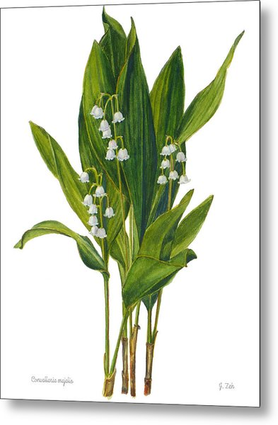 Lily Of The Valley - Convallaria Majalis Metal Print