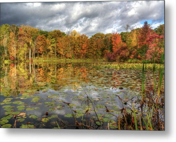 Lily Pads On Foster Pond Metal Print