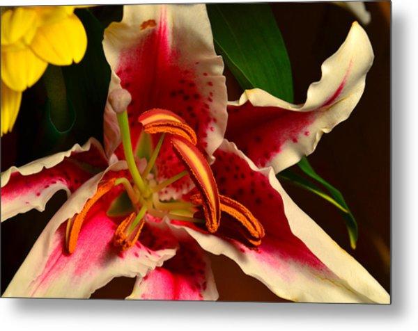 Lily Rose Flower 2 Metal Print