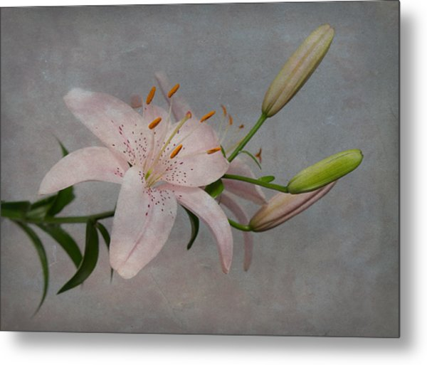 Pink Lily With Texture Metal Print