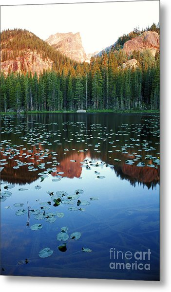 Lilypad Pond With Hallet Peak Metal Print