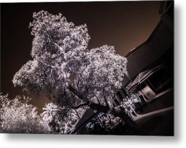 Lincoln Road Tree Metal Print
