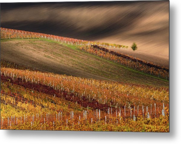 Line And Vine Metal Print