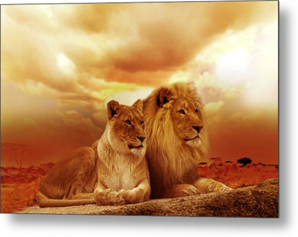 Lion Couple Without Frame Metal Print