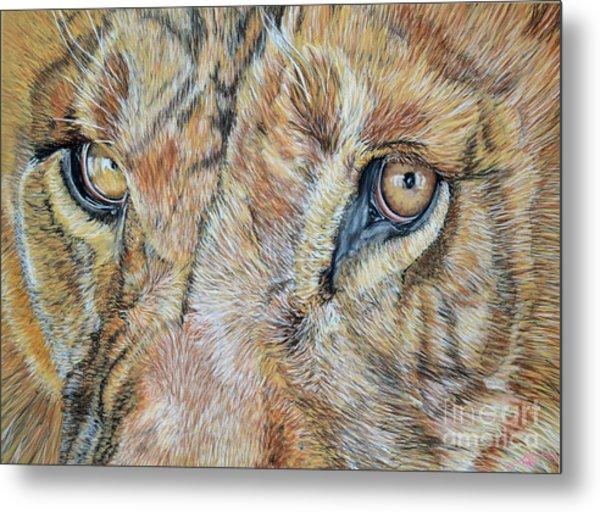 Lion Eyes Metal Print by Ann Marie Chaffin