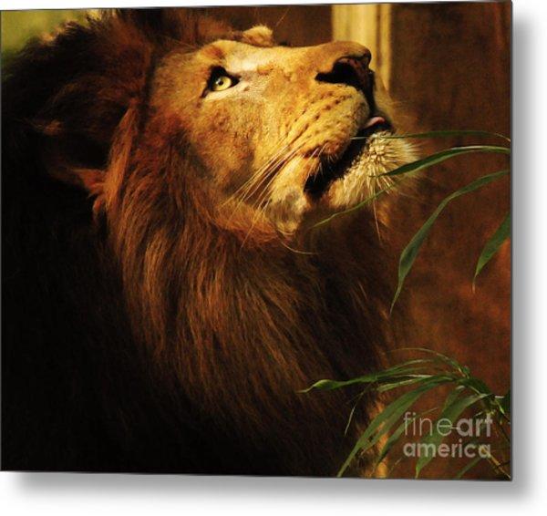 The Lion Of Judah Metal Print