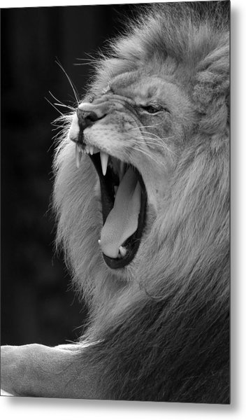 Lion Roar Black And White  Metal Print