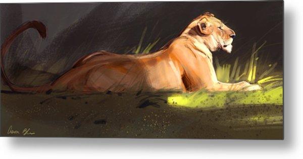 Lioness Sketch Metal Print