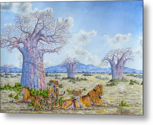 Lions By The Baobab Metal Print