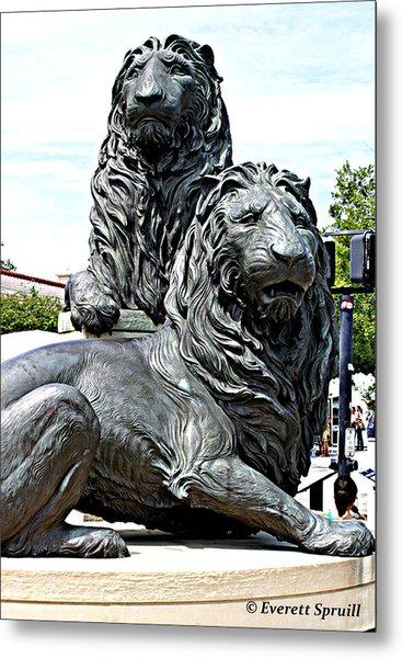 Lions Of Marco Island Metal Print