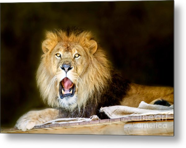 Lion's Pride Metal Print by Shannon Rogers