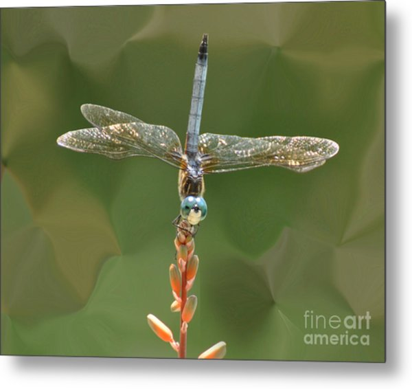 Liquify Dragonfly Metal Print