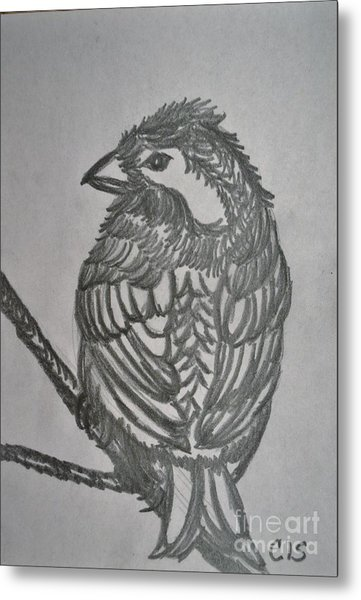 Little Bird Metal Print by Cecilia Stevens