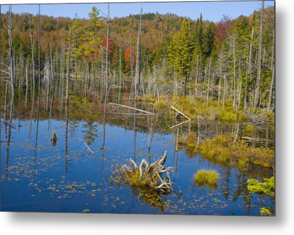 Little Cat Pond  Metal Print