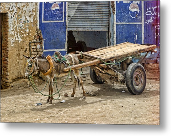 Little Donkey With Cart Metal Print