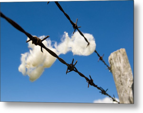Little Fluffy Clouds 1 Metal Print