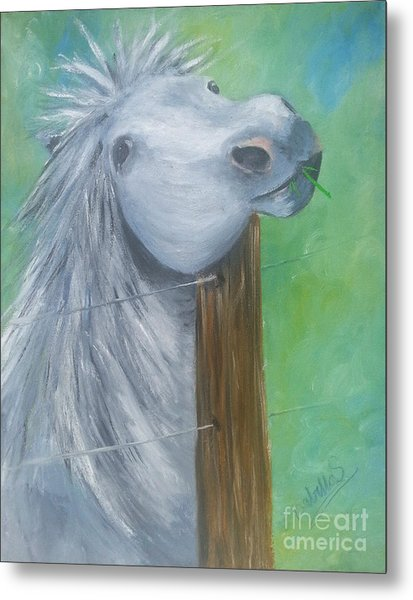 Little Grey Has An Itch Metal Print