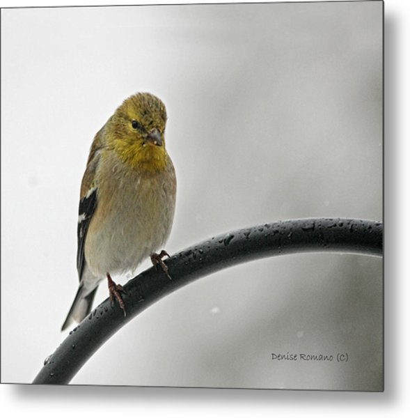 Little Guy Metal Print