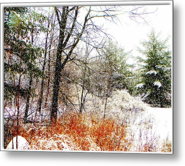 Little January  Metal Print by Dianne  Lacourciere
