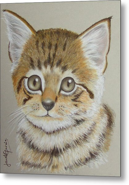 Little Kitty Metal Print