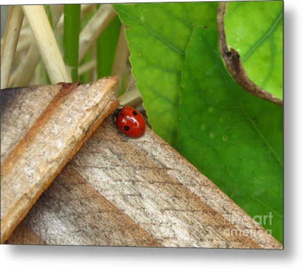 Little Lazy Ladybug Metal Print