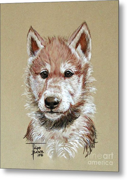 Little Lobo Metal Print