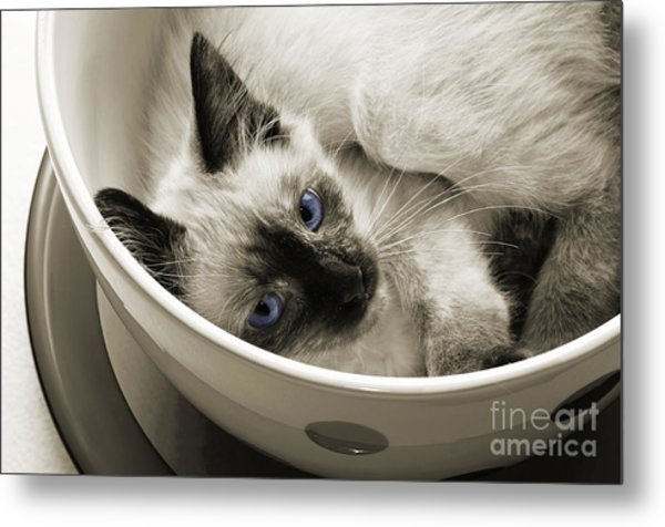 Little Miss Blue Eyes B W Metal Print