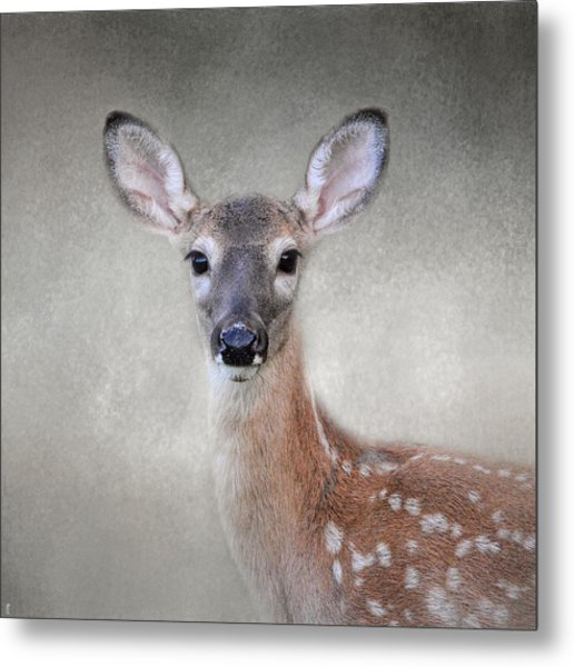 Little Miss Lashes - White Tailed Deer - Fawn Metal Print