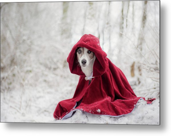Little Red Riding Hood In Winter Metal Print
