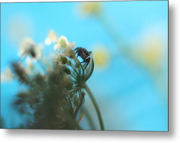 Little Spider Metal Print