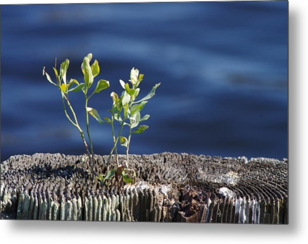 Little Tree Metal Print
