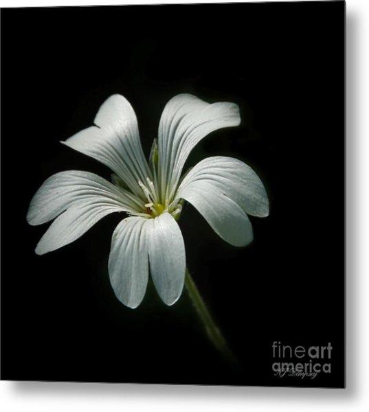 Little White Flower Metal Print