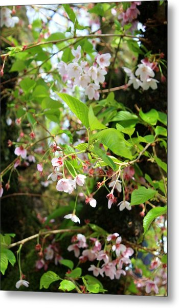 Little White Flowers Metal Print by Cathie Tyler