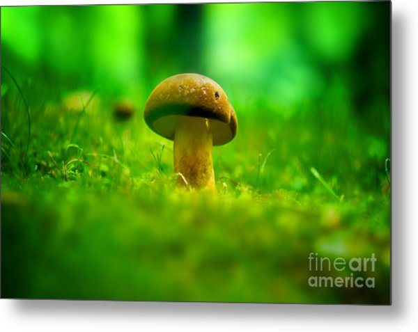 Little Wild Mushroom On A Green Forest Patch Metal Print