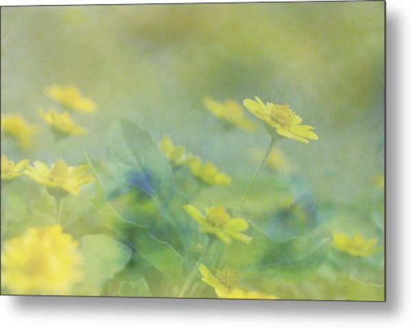 Little Yellow Beauties Metal Print