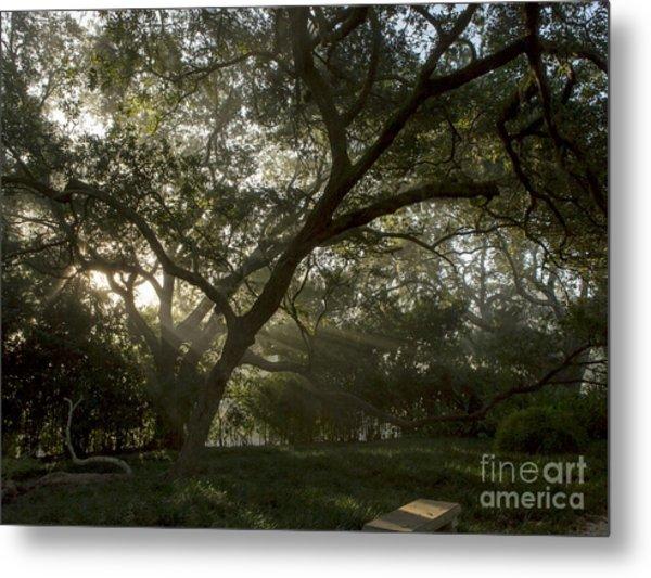 Live Oak Light Streaming Through Fog Metal Print by Kelly Morvant