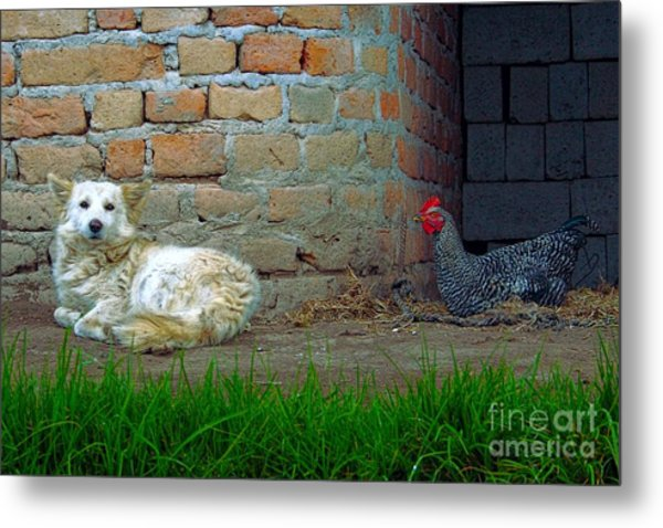 Living In Perfect Harmony Metal Print