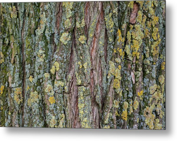 Living Tree Metal Print