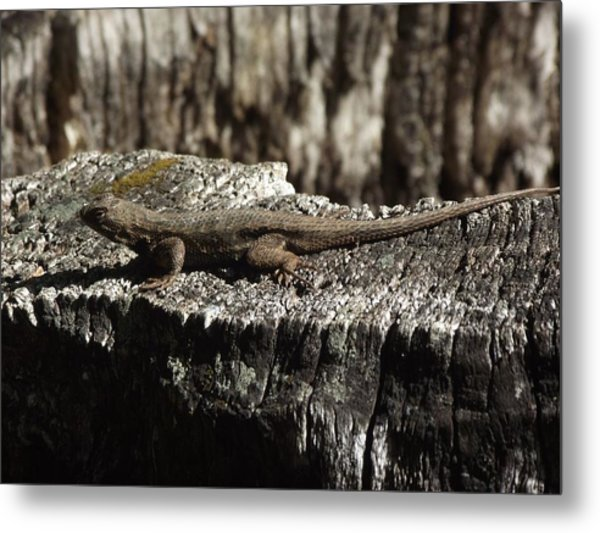 Lizard In Thought Metal Print by James Rishel