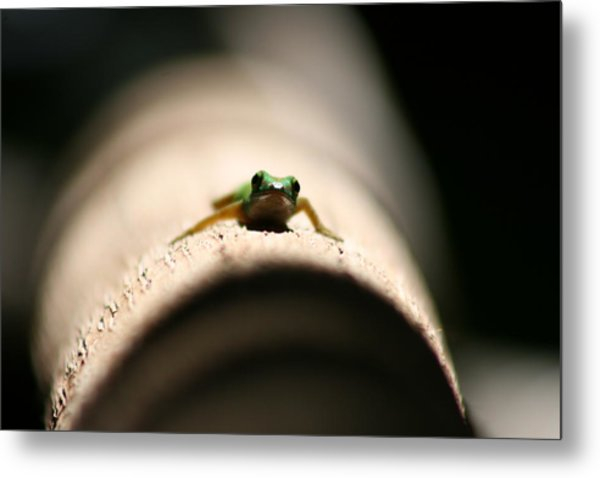 Lizard On A Log Metal Print