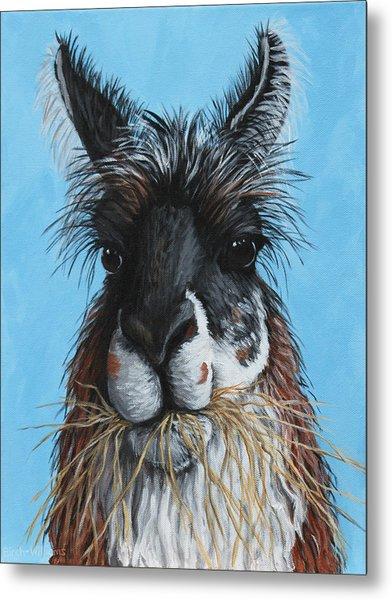 Llama Portrait Metal Print by Penny Birch-Williams