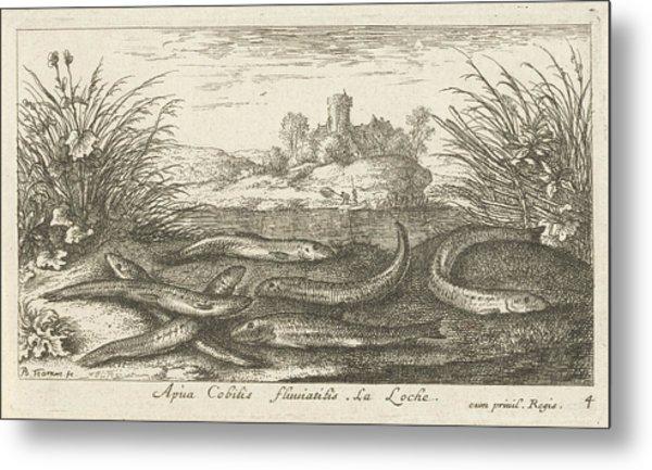 Loaches On A River Bank, Albert Flamen Metal Print by Albert Flamen