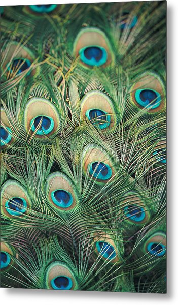 Loads Of Feathers Metal Print