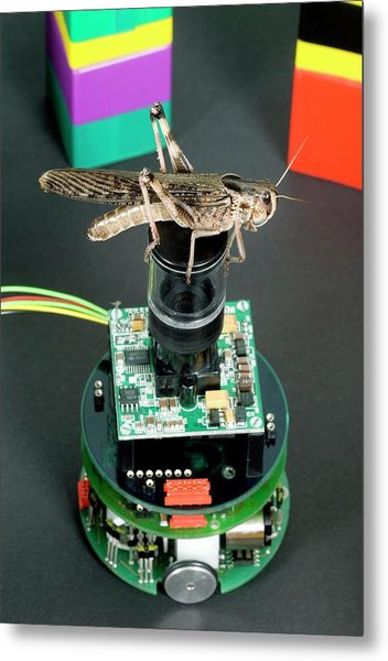 Locust Vision Robot Metal Print