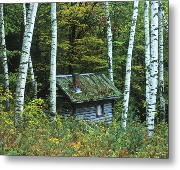 Log Cabin In The Birch Forest Vermont Metal Print
